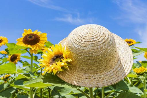 Sunflower and straw hat 6