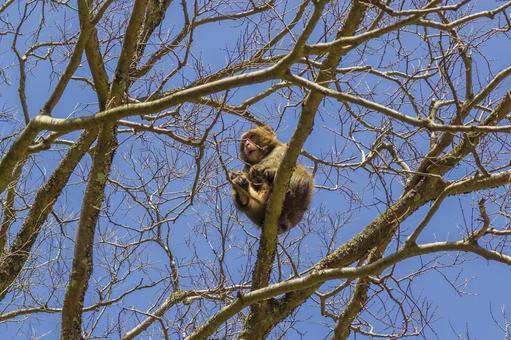 日本猴子和藍天1