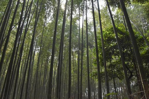 You can heal your mind and body in the bamboo forest as far as you can see Arashiyama (Kyoto)