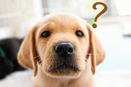 Cute puppy Hatena?