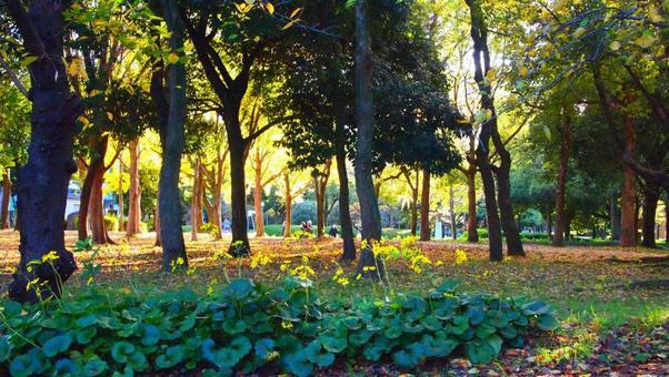 햇살 오사카 성 공원