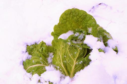 겨울 야채 배추 ⓸
