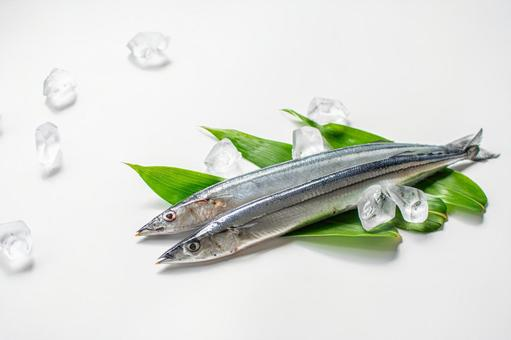 Fresh image with saury and ice