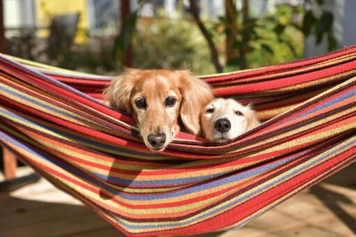 Creatures animals dogs riding in hammocks