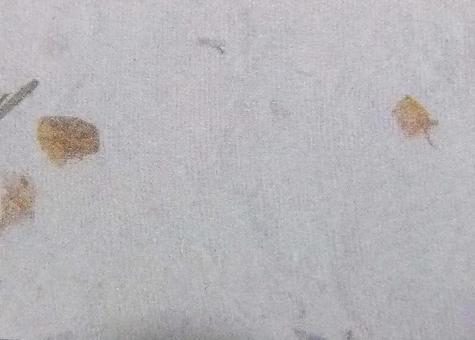 日本紙落葉