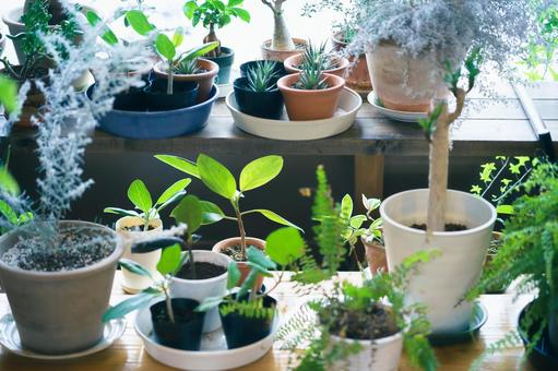Plant pots lined up on the windowsill