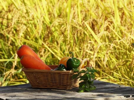 Harvest of carrot bell pepper paprika