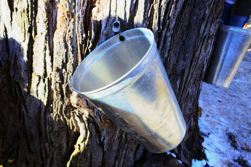 Maple syrup collection bucket
