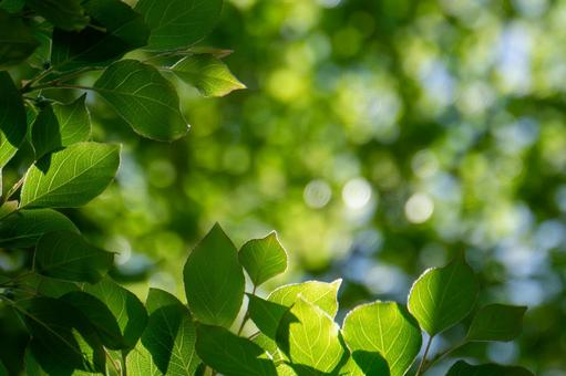 Fresh green nature background in early summer
