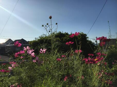 Cosmos breathing in the wind