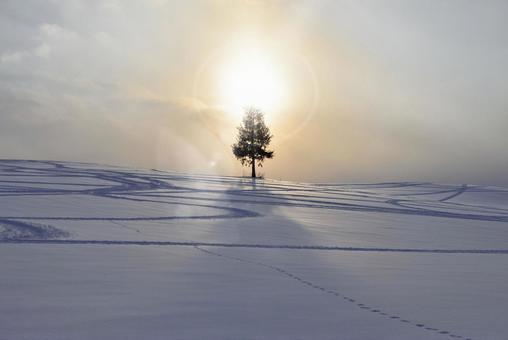Biei · sunset tree