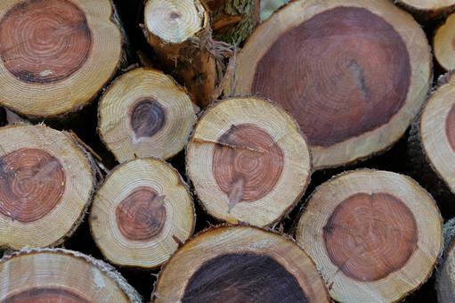 나무 잘라 통나무
