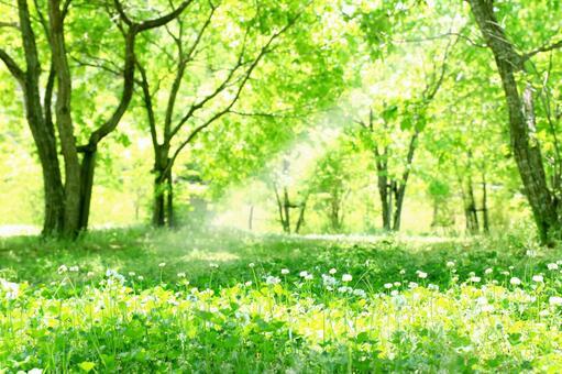 新鮮的綠色葉子太陽