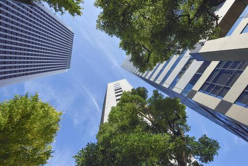 Business district skyscrapers and trees