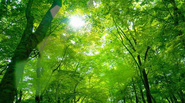 Fresh green forest Early summer sunbeams