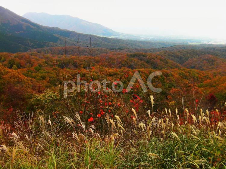 蒜山高原の秋の写真