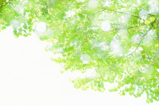 Fresh green sunlight through the trees