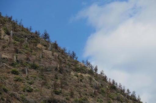 삼목 나무 심기