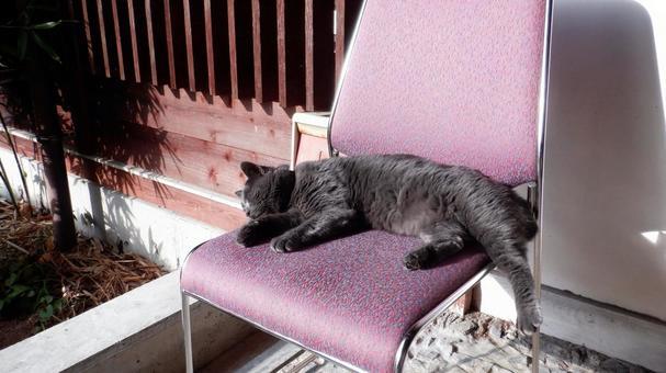 벳푸 협곡 온천의 간판 고양이 씨
