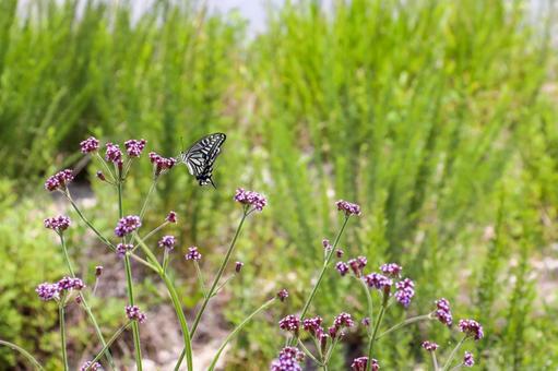 풀숲의 호랑 나비