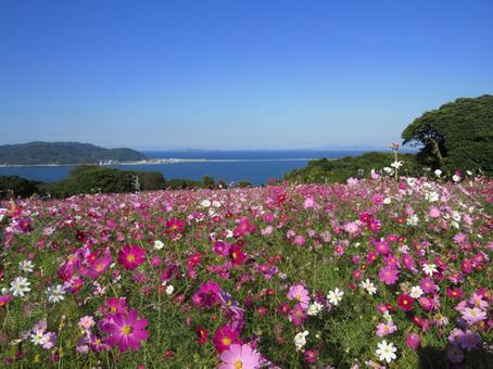 Nogashima Island Park's fall cherry tree