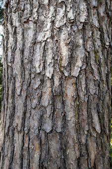 소나무의 껍질