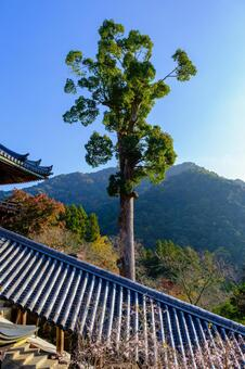 Autumn leaves at Hasedera Temple in Nara Prefecture