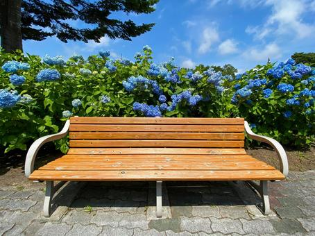 Hydrangea and bench