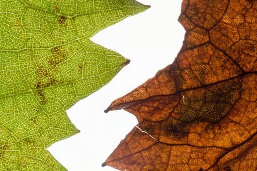 녹색 잎과 낙엽 잎 시설 1