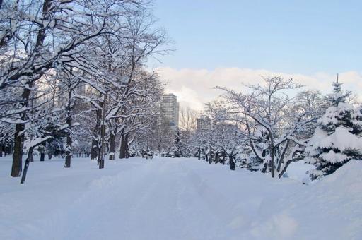 大雪的公园