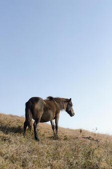 野生馬15