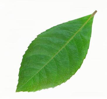 Leaf (clipping)