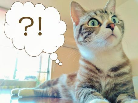 What a cat is surprised and surprised Hatena surprised balloon? !! What a cat
