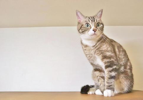 고양이 고양이 고양이 들여다 고양이 들여다 고양이 궁금한 고양이의 전신