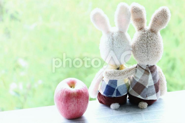 寄り添うウサギの写真