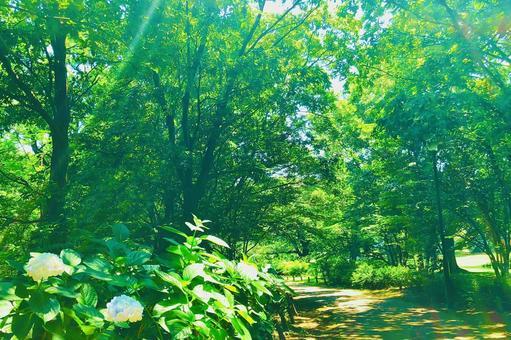 開花的綠色路徑背景