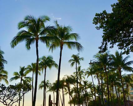 하와이의 황혼