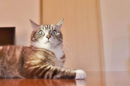 A tabby cat that is surprised and scared