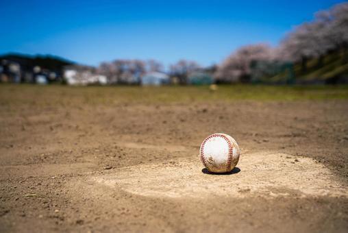 벚꽃과 야구장 홈베이스와 공