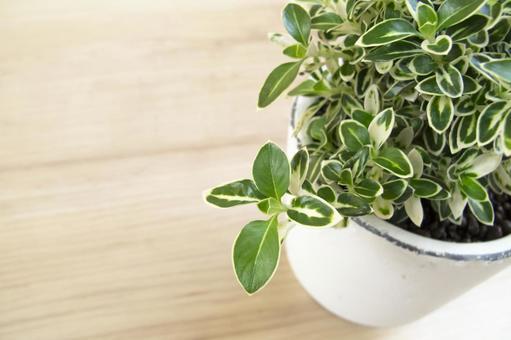 미니 관엽 식물