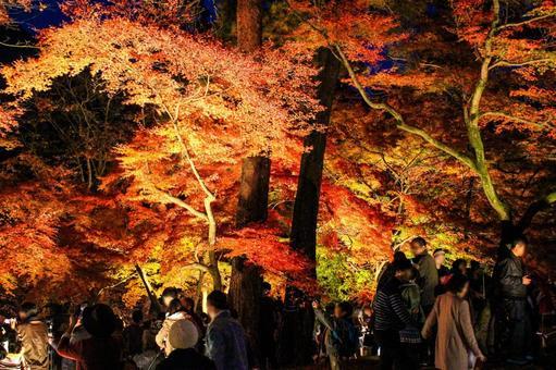 秋天的彩色風景點亮