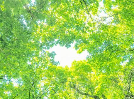Fresh green window green image