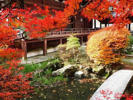 교토 야마시나 毘沙門堂의 단풍