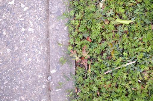 지상 및 잡초의 경계