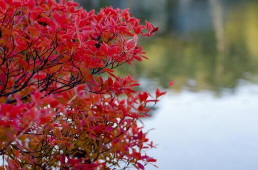 Fall scenery 9