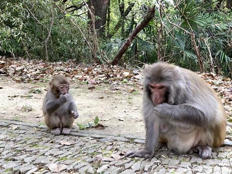 野猴父母與子女(中國蘇州)