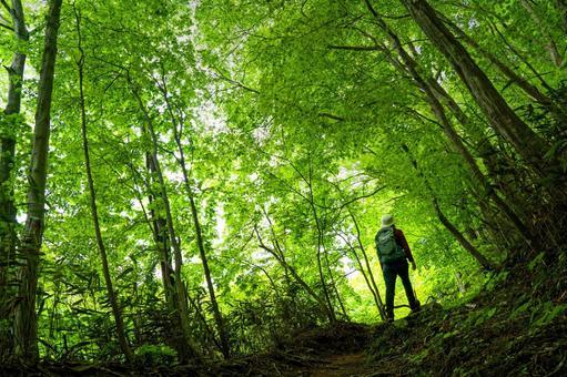 Hiking forest bath