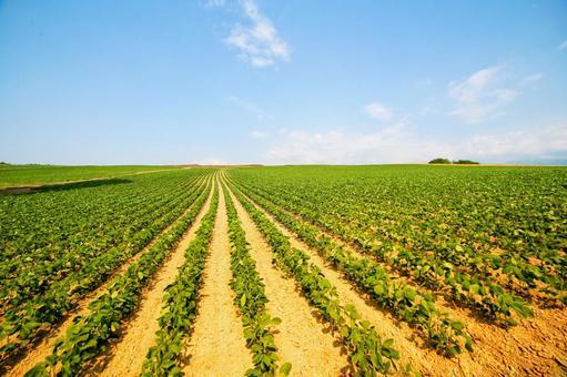비 에이의 광대 한 밭
