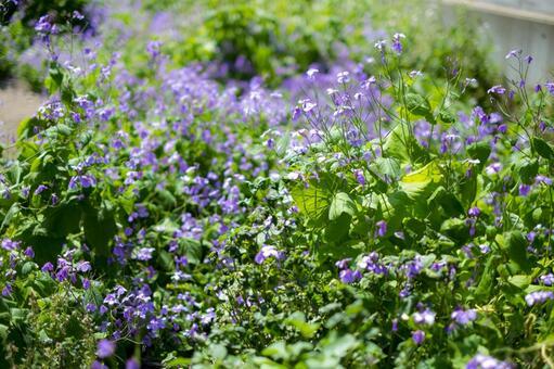 공터의 꽃 무의 꽃