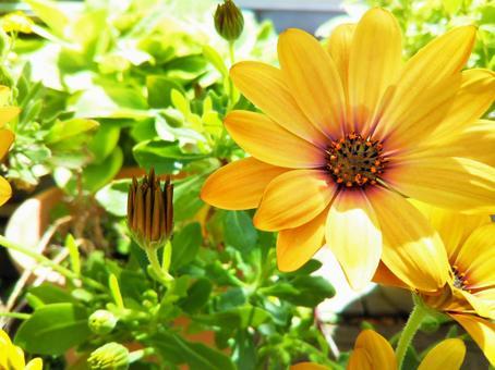 꽃 식물 정원 보태니컬 이미지 수컷 테오 뻬루 마무 꽃
